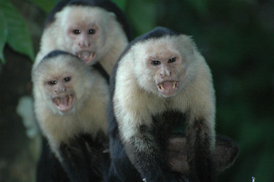 Monkeying around in Costa Rica!